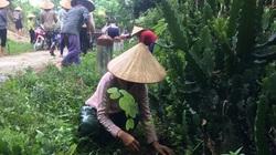 Hội viên nông dân Mai Châu: Tích cực tham gia bảo vệ và phát triển rừng