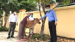Thanh Hóa: Hội Nông dân thành phố Thanh Hóa trao 24 con bò sinh sản cho hộ nghèo