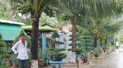 Bến Tre: Bất ngờ ở vùng đất đáng sống, khu phố trồng những cây dừa thấp tè mà ra trái quá trời