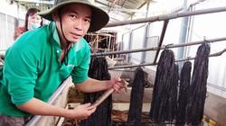 Sóc Trăng: Nuôi lươn dày đặc trong bể nuôi ếch bỏ hoang, nuôi vụ nào trúng vụ đấy, ai cũng bất ngờ