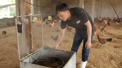 """Độc đáo: Trang trại """"nói không"""" với dịch bệnh nhờ... xông thuốc, cho gà ăn tảo xoắn"""