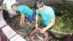 """Quảng Bình: """"Đánh liều"""" nuôi loài cá vừa dài vừa trơn, con nào cũng to bự, 9X thu tiền tỷ"""