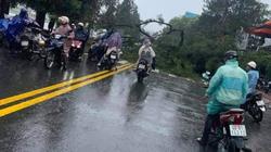 Đà Lạt: Nhiều cây xanh gãy đổ do bão số 2, một người bị nứt xương chân