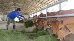 Đi tìm tiêu chí cho thịt bò mát