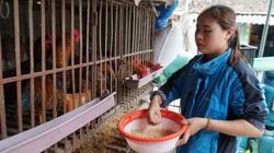 Thiếu người giám sát dịch bệnh, Bắc Ninh xin ý kiến 4 bộ về chế độ cho cộng tác viên thú y cơ sở