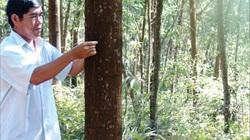 50.231 tỷ đồng để đầu tư trồng, bảo vệ rừng, chế biến lâm sản
