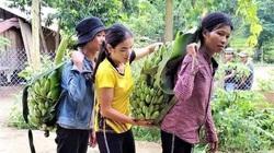 Cảm động, người dân miền núi Quảng Nam ủng hộ hàng tấn rau, quả cho vùng dịch Đà Nẵng
