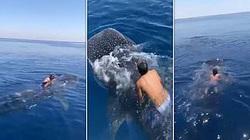 Clip: Rợn người xem người đàn ông cưỡi con cá mập lớn nhất thế giới