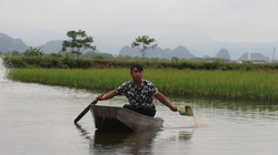 Làm 1 vụ cá - lúa đã có trên 100 triệu đồng, nhiều nông dân muốn học theo