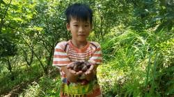 Lạng Sơn: Trồng cây ra thứ quả đầy lông, đầy gai, bên trong ngọt bùi, dân làng bán chạy như tôm tươi