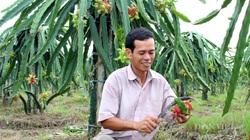 Nông sản lao đao vì Covid-19: Nhà nông cứu mình cách nào?