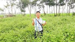 Nghệ An: Cặp phu thê vì mê cà dại mà cất bằng cao đẳng về quê nghịch đất...ra hàng trăm triệu