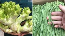 Những loại rau kỳ lạ có giá đắt hơn cả thịt cá ở Việt Nam, muốn mua ăn không phải chuyện dễ