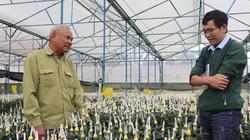 Đà Lạt: Một nông dân U70 bỏ ra 75 cây vàng mua đất chỉ để trồng hoa kiểu này
