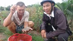 """Long An: Kiên quyết không cấp điện cho nông dân """"xé rào"""" nuôi tôm trên đất lúa"""