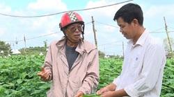 """Trồng thứ rau """"thức"""" cả ngày lẫn đêm, ông nông dân tỉnh Đồng Nai hái lá bán sang Hàn Quốc thu tiền tỷ"""