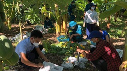 Quảng Nam: Hàng chục người hái đu đủ chín bán giúp gia đình có 2 bệnh nhân Covid-19