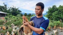 """Quảng Ninh: Nuôi thứ gà đặc sản """"khoác áo hoa"""", lớn con nào thương lái khuân đi hết"""