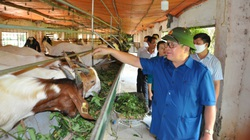 Trang trại nuôi dê ngoại nhiều nhất, rộng tới 15ha ở Hà Nội có gì đặc biệt?