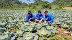 """Tuyên Quang: Nông dân ở đây được """"lên đời"""" nhờ trồng rau sạch trái vụ"""