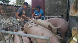Giá lợn hơi còn 75.000 đồng/kg, Cục Chăn nuôi khẳng định: Nông dân vẫn có lãi