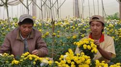 """Hóa ra """"cái nôi"""" nghề trồng hoa ở Đà Lạt lại là một nơi """"dính dáng"""" từ miền Bắc: làng Hà Đông"""