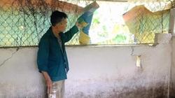 Quảng Trị: Bắt trộm lợn giống của nông dân đáng báo động, khổ nhất là mất trộm lợn tái đàn