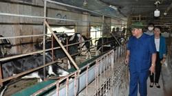CLIP: Chủ tịch Hội Nông dân Việt Nam bất ngờ với cách chăm con đặc sản tại trang trại nuôi dê lớn nhất Việt Nam
