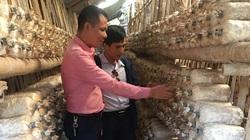 Nam Định: Ông nông dân bảnh trai trồng thứ gì trong nhà mà khách tấp nập vào, ra, đã thế còn thu tiền tỷ