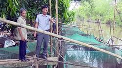 Đón mùa nước nổi, nông dân tỉnh Hậu Giang đã nuôi 360 lồng cá, vèo cá, thả nhiều nhất là loài cá gì?