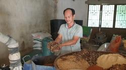 Nam Định: Nuôi thứ lợn cho ăn sâm, nghe nhạc trữ tình bán cho nhà giàu