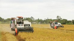 Hạt gạo Việt - từ bát cơm cứu đói đến thu tỷ đô