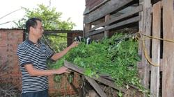 Đắk Lắk: Từng chạy ăn từng bữa, trở thành hộ thoát nghèo duy nhất được đề nghị tặng bằng khen