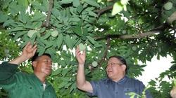 Lạng Sơn: Cho nông dân vay tiền trồng cây đặc sản mau làm giàu