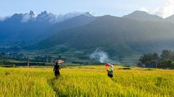 Lào Cai: Không ngờ chân núi Ngũ Chỉ Sơn lại có ruộng bậc thang đẹp mê mẩn thế này