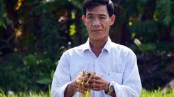 Vụ phun thuốc diệt cỏ, diệt cả... lúa: Làm đối chứng nếu mẫu thuốc đạt chất lượng