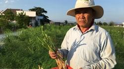 Một tỷ phú nông dân tỉnh Ninh Thuận trồng thứ rau gì mà được nhiều cán bộ cấp cao đến động viên?