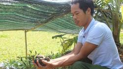 Nam Định: Nuôi con chậm chạp, bò quanh ao, tới mùa đẻ rõ lắm, anh nông dân thành tỷ phú