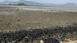 Ninh Thuận: Nuôi hàu xong, hàng nghìn lốp xe cũ vứt tràn lan ở khu vực Đầm Nại