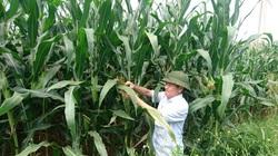 Trung Quốc lũ lụt, nguy cơ thiếu hụt nông sản, Việt Nam tăng tốc sản xuất vụ đông để xuất khẩu
