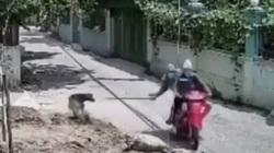 VIDEO: Trộm đi xe máy dùng thòng lọng bắt chó nhanh như chớp