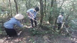 Tân Uyên: Hiệu quả từ chính sách chi trả dịch vụ môi trường rừng