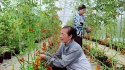 Hà Nội: Sức dân giúp Phúc Thọ đổi thay