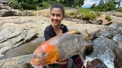 """Con cá quý hiếm mà nữ diễn viên Kim Thư """"khoe"""" ở một ngọn núi lửa tỉnh Gia Lai là loài cá gì?"""