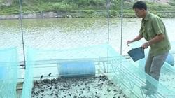 Cho ếch ăn tỏi mỗi ngày, lão nông kiếm về hàng trăm triệu đồng