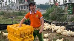 Giá gia cầm hôm nay 5/8: Giá gà thịt công nghiệp bất ngờ tăng trở lại, vịt khó bán