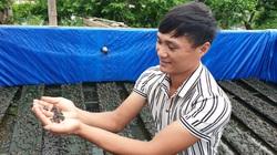 Nam Định: Nuôi ếch nhảy bộp bộp, la liệt con to, con nhỏ, 9X bỏ túi gần nửa tỷ mỗi năm