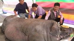 Giá thịt lợn ở Trung Quốc khó giảm từ nay đến cuối năm