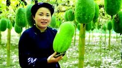 Trồng loại bí xanh thơm lừng từ lá đến quả, dân Ba Bể thu 200 triệu đồng/ha