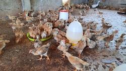 Quảng Trị: Kiểm điểm phó chủ tịch xã để gà dự án 'chạy' vào... nhà mình